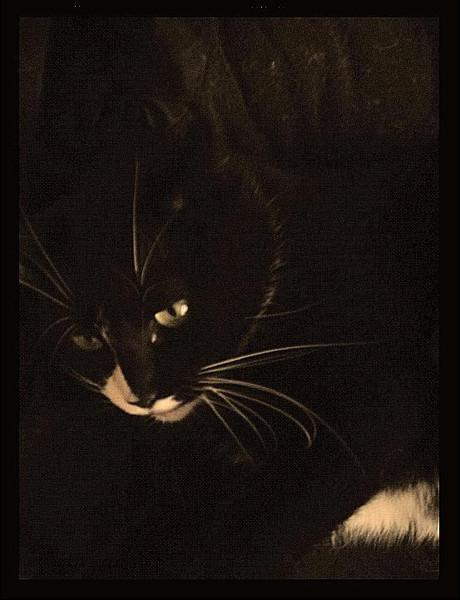 Katze, Schwarz, Fotografie, Tiere, Kater,