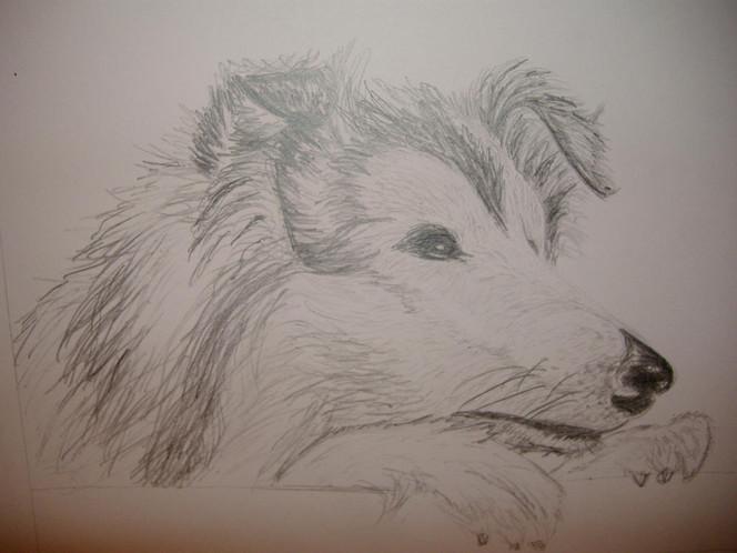 Hund, Tiere, Zeichnung, Skizze, Natur, Hundeportrait