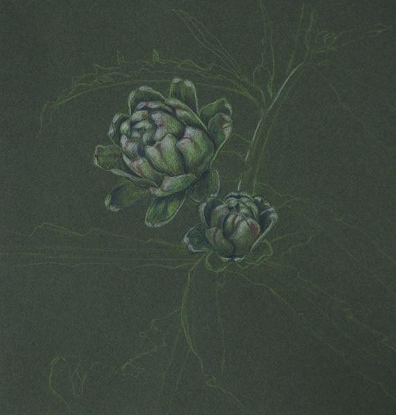 Skizze, Artischocke, Buntstiftzeichnung, Zeichnung, Pflanzen, Zeichnungen