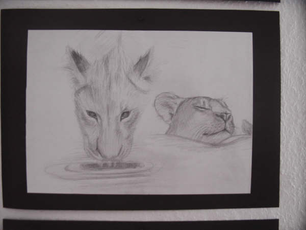 Bleistiftzeichnung, Zeichnung, Natur, Löwin, Afrika, Tiere