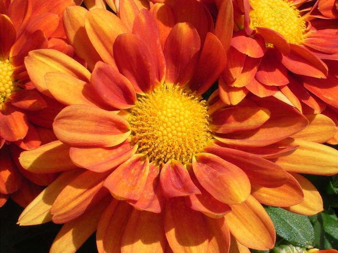 Orange, Natur, Grün, Fotografie, Blumen, Pflanzen