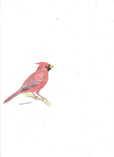 Skizze, Vogel, Zeichnung, Äste, Rot, Zeichnungen