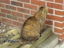 Tiere, Fotografie, Katze, Pinnwand