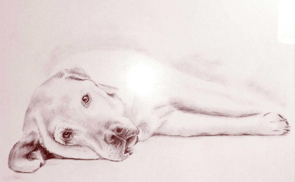 """labrador """"gulliver""""  tierportrait portrait hund"""