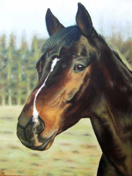 Pferdeportrait, Naturalismus, Ölmalerei, Tiermalerei, Auftragsmalerei, Pferde