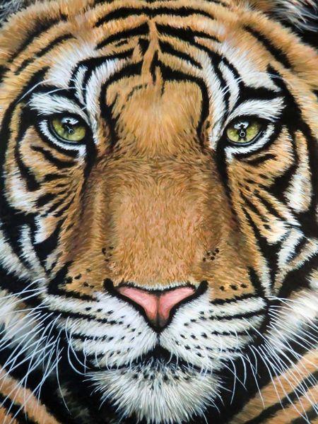 Tiger, Augen, Tierportrait, Realismus, Spiegelung, Portrait