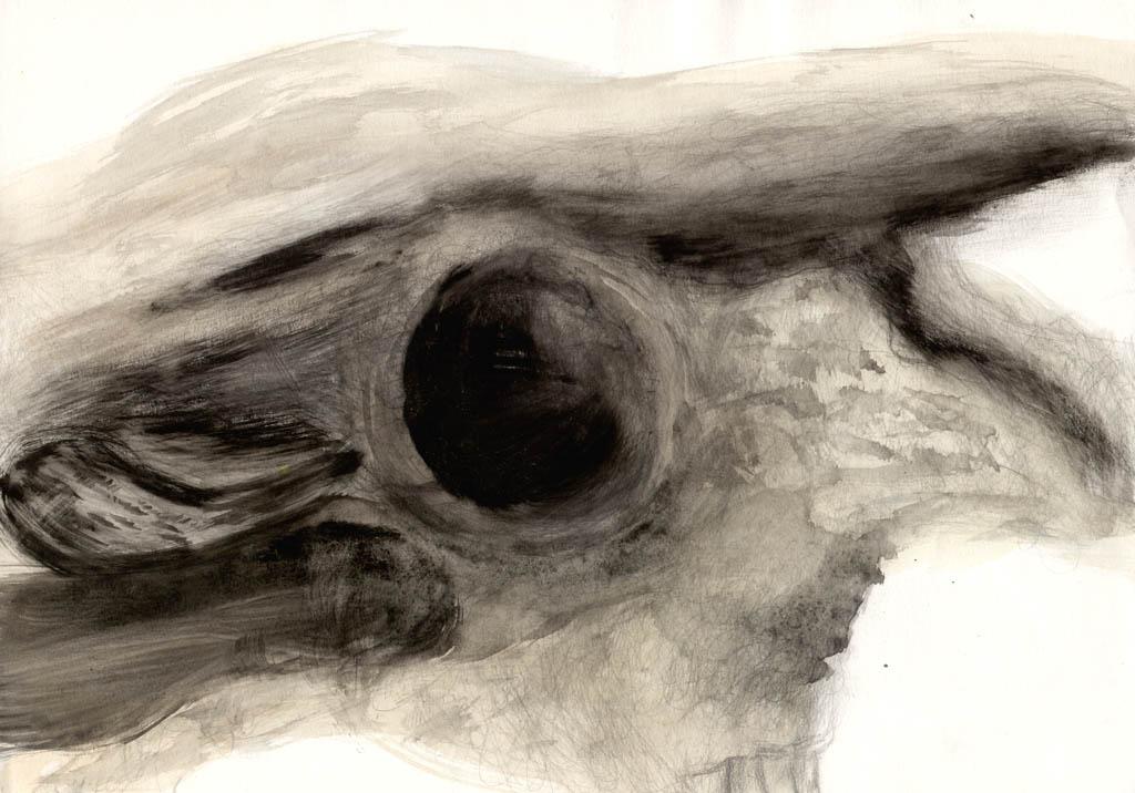 Image: Skizze, Schädel, Anatomie, Aquarellmalerei von Udo Schnaars ...