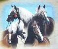 Wandgestaltung, Pferde, Portrait, Aussenwerbung