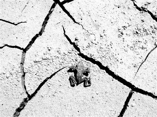 Tod, Frosch, Suizid, Fotografie, Tiere, Trocken