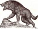 Psychedelisch, Werwolf, Zeichnungen,