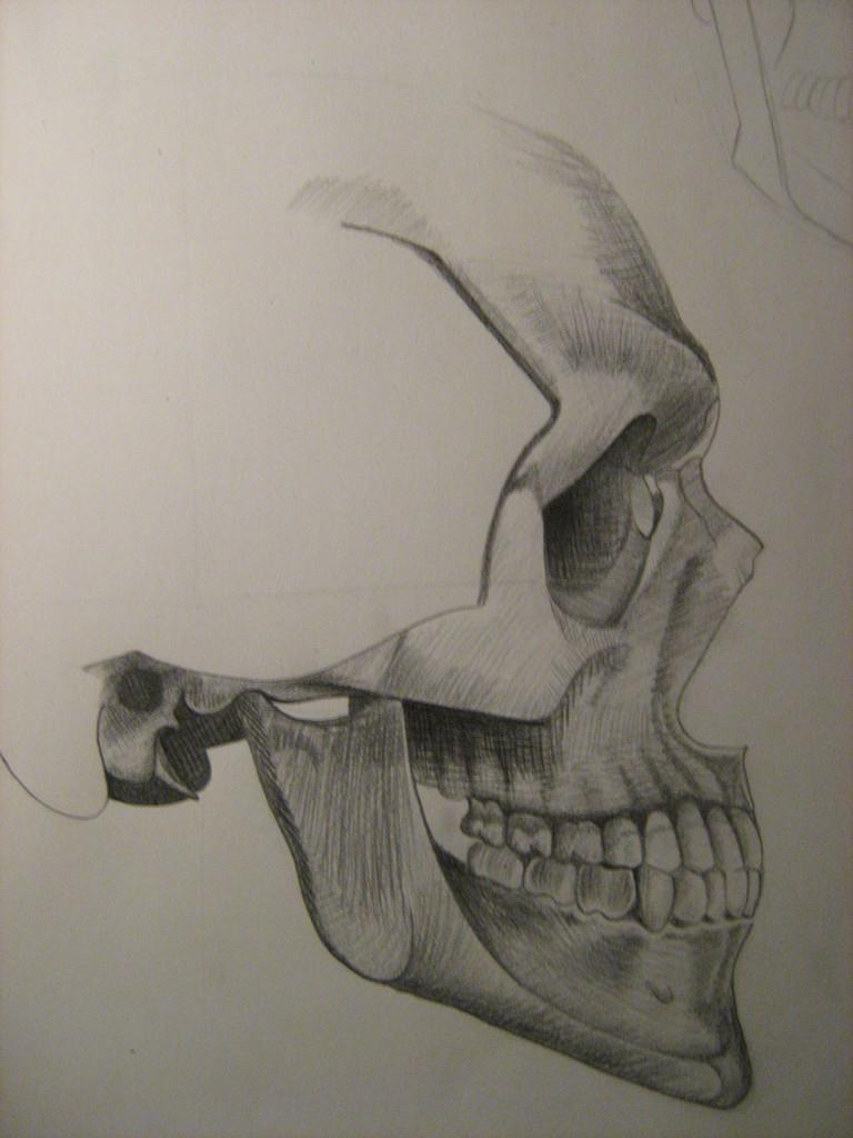 Bild: Anatomie, Bleistiftzeichnung, Kopf, Menschen von splintholz ...