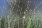 Gras, Licht, Lichtstrahlen, Tau