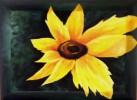 Stillleben, Gelb, Sonnenblumen, Blumen
