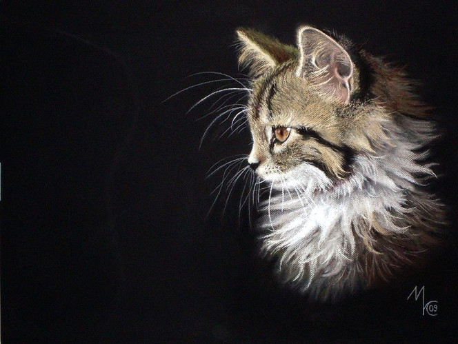 Portrait, Katze, Zeichnung, Tiere, Zeichnungen