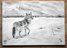 Fuchs, Weite, Schnee, Kojote
