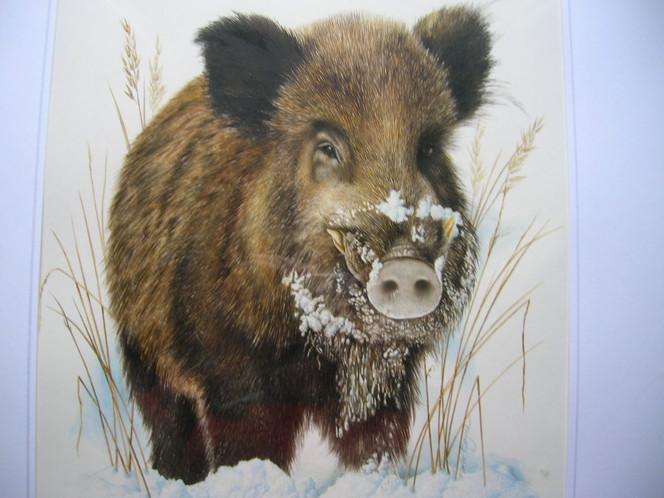 Tiere, Wildschwein, Malerei