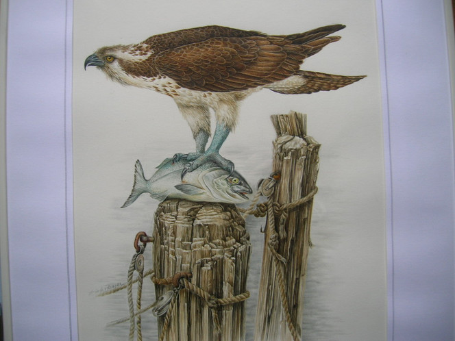 Vogel, Fisch, Fischadler, Malerei, Tiere