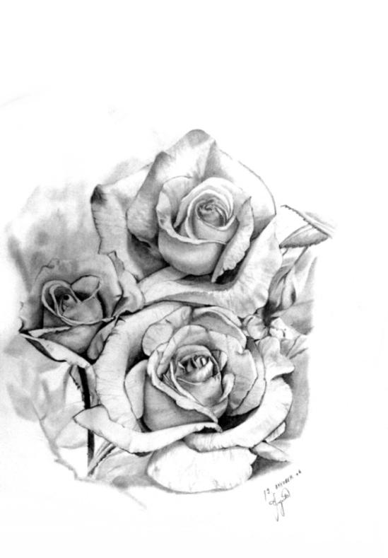 Rosen bleistiftzeichnung  Bild: Pflanzen, Stillleben, Rose, Zeichnung von bojana bei KunstNet