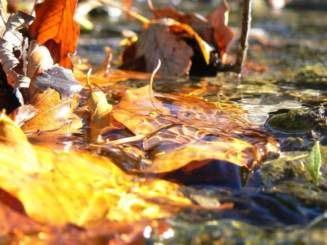 Fotografie, Herbst