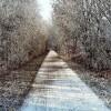 Landschaft, Baum, Fotografie, Weg