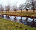 Baum, Fluss, Landschaft, Fotografie