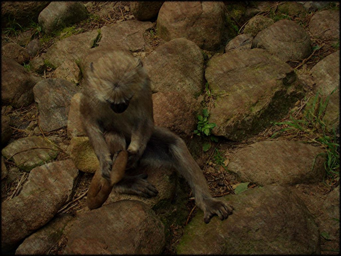 Affe, Festhalten, Stein, Fotografie, Tiere