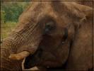 Augen, Elefant, Wimpern, Fotografie