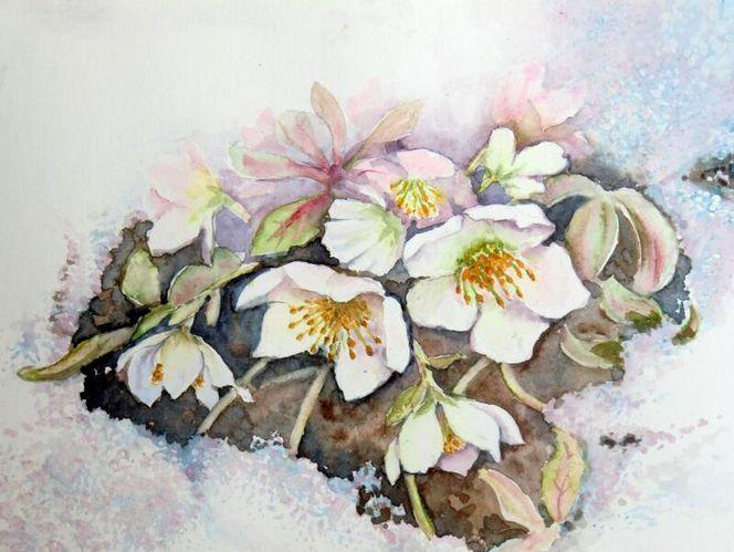 Schnee, Blumen, Christrosen, Aquarell