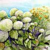 Blumen, Hortensien, Aquarell, Aquarelle blumen