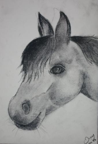 Pferde, Zeichnung, Pony, Kohlezeichnung, Portrait, Zeichnungen