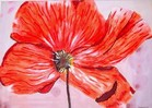 Blumen, Malerei, Groß, Rot