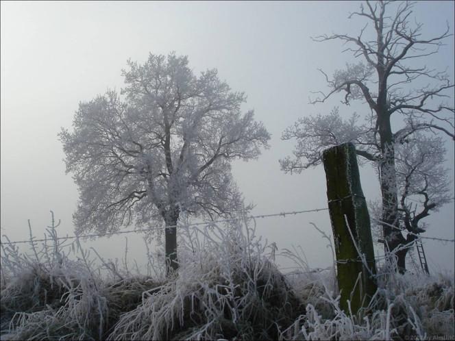 Baum, Winter, Eis, Niederrhein, Fotografie