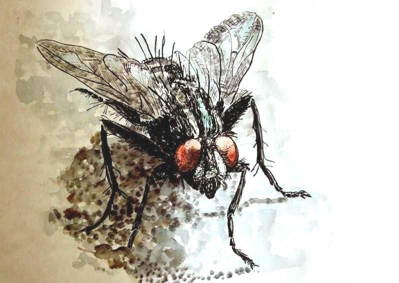 bild fliege tier insekt schwarz von limone bei kunstnet. Black Bedroom Furniture Sets. Home Design Ideas