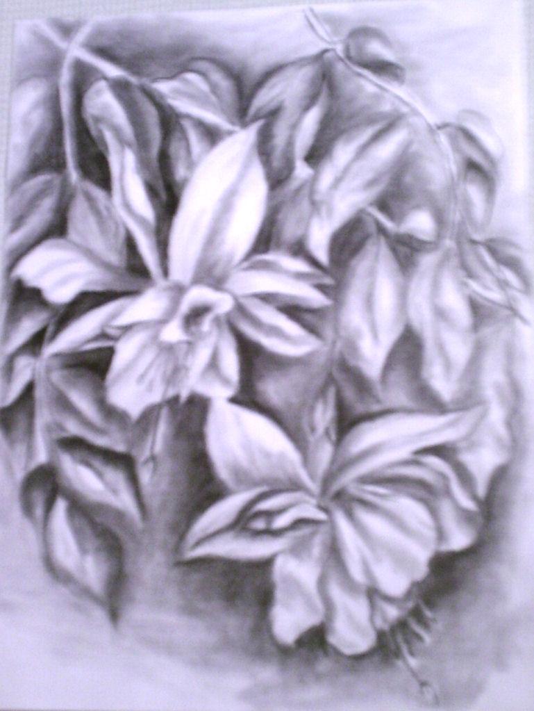 Fuchsie Bleistiftzeichnung Blumen Zeichnungen Stillleben Von
