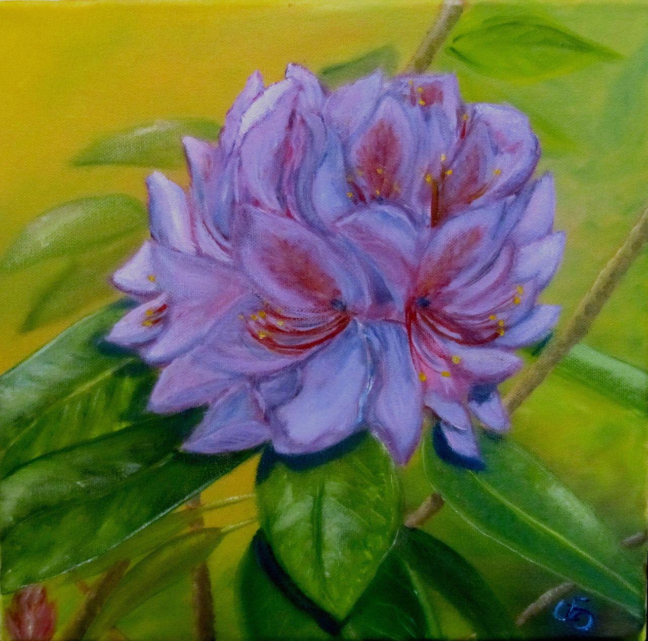 Verführerisch Blumen Mai Beste Wahl Pflanzen, Blumen, Blüte, Flora, Garten, Rhododendron
