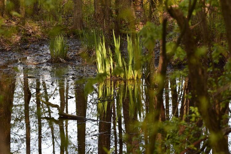 Baum, 2017, Sumpf, Frühling, Moor, Wasser