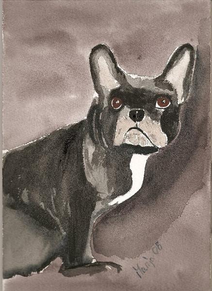Hund, Blick, Malerei, Tiere,