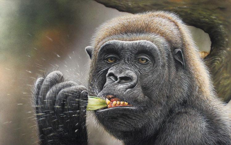 Gorilla, Sprühkunst, Airbrush, Sprühdose, Affe, Zoofitti