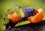 Airbrush, Papagei, Sprühdose, Malerei