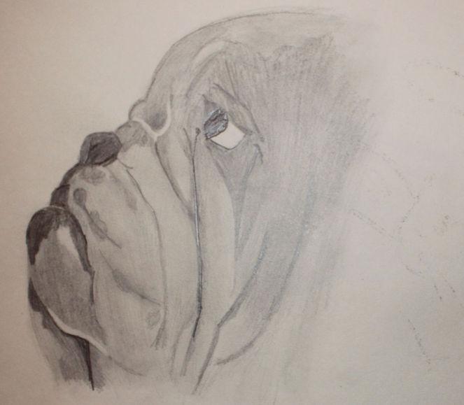 Hund, Zeichnungen, Tiere