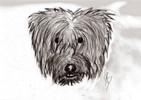 Hund, Kohlezeichnung, Zeichnungen, Tiere