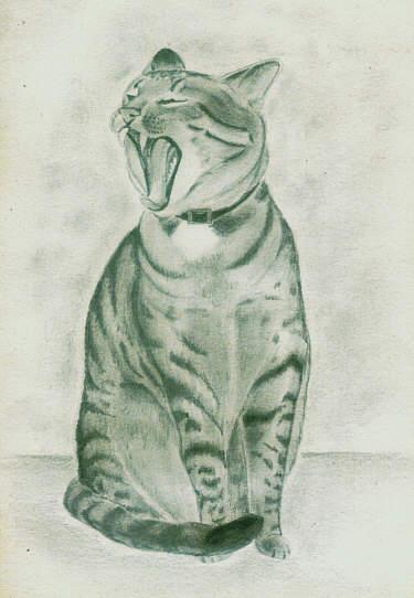 Bleistiftzeichnung, Katze, Zeichnungen, Tiere, Kater
