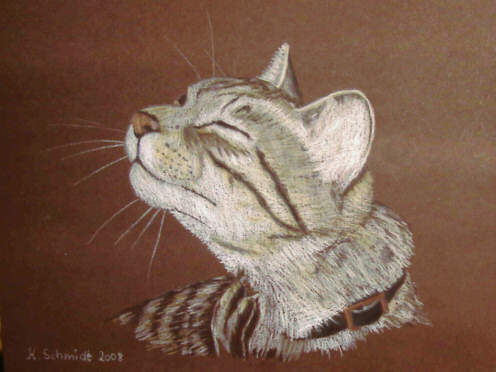 Buntstiftzeichnung, Katze, Zeichnungen, Tiere, Kater