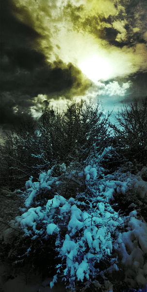 Blau, Natur, Schnee, Bushes, Fotografie, Surreal