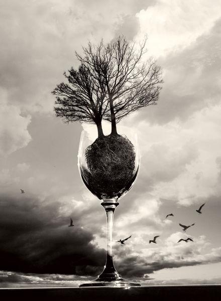 Schwarzweiß, Licht, Baum, Surreal, Himmel, Digital