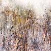 Gras, Stimmung, Frühling, Helligkeit