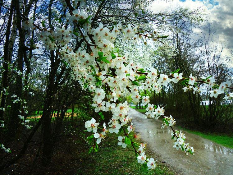 Natur, Schuss, Zeit, Blüte, Existenz, Fotografie