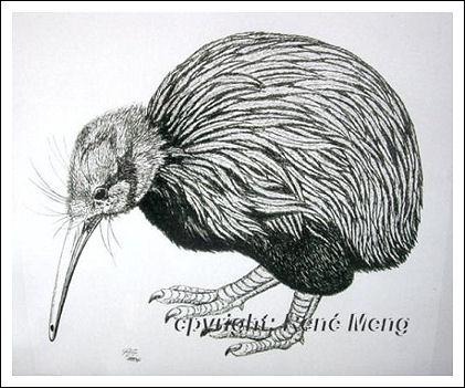 Tiere, Vogel, Kiwi, Portrait, Zeichnungen