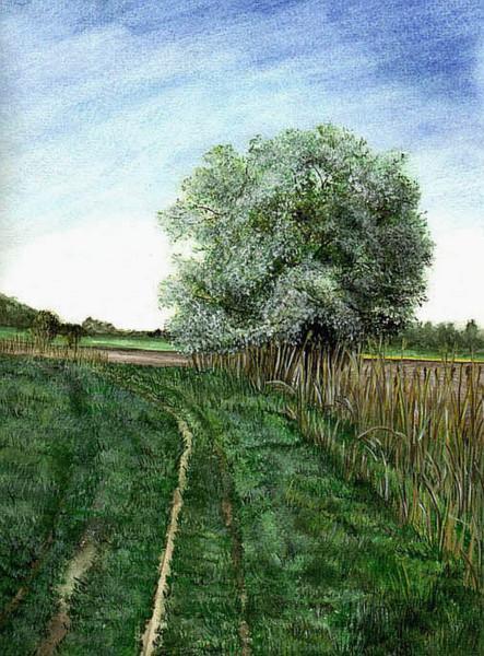 Baum, Blau, Grün, Wiese, Landschaft, Aquarell