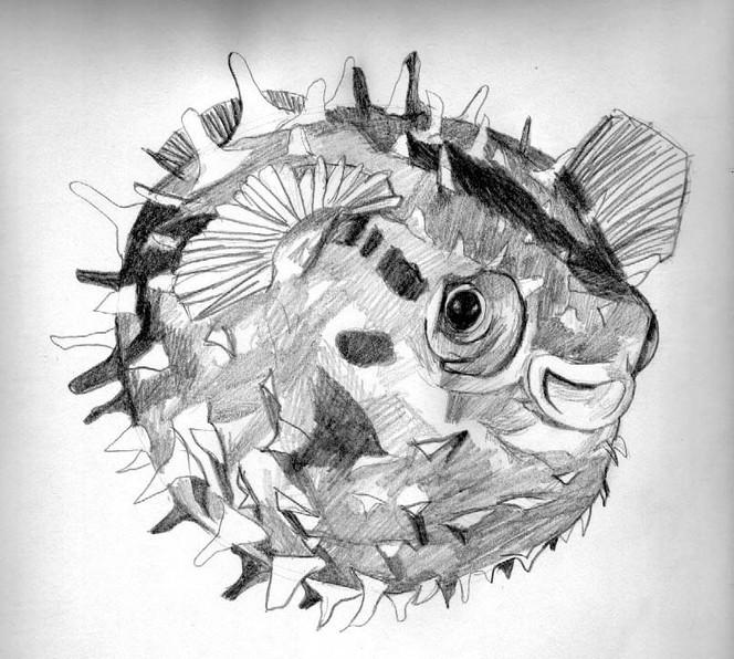 Skizze, Zeichnung, Kugel, Fisch, Bleistiftzeichnung, Tiere